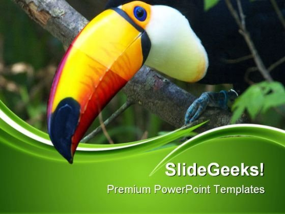 Toucan Animals PowerPoint Templates And PowerPoint Backgrounds 0511
