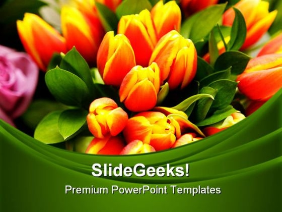 Tulip Flowers Beauty PowerPoint Templates And PowerPoint Backgrounds 0311