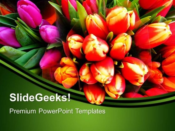 Tulip Flowers Nature PowerPoint Templates And PowerPoint Themes 0512