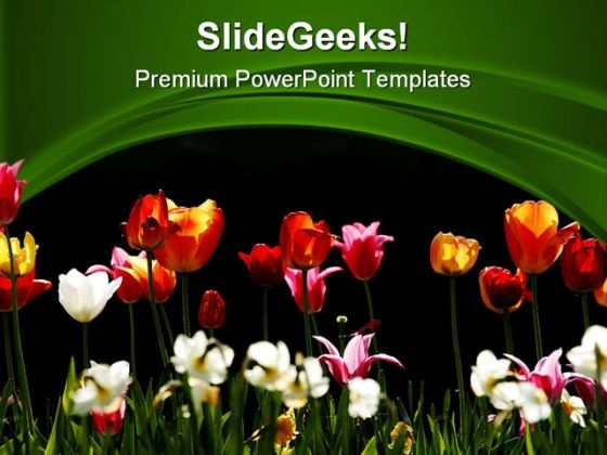 Tulips Beauty PowerPoint Templates And PowerPoint Backgrounds 0311