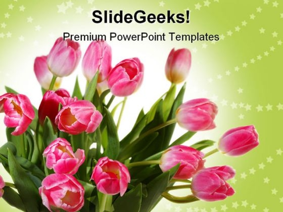 Tulips Bouquet Beauty PowerPoint Templates And PowerPoint Backgrounds 0211