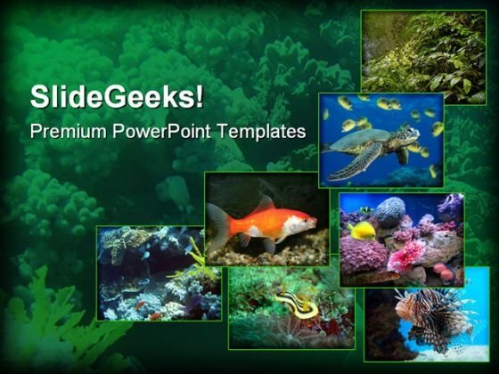 Underwater Animals Nature PowerPoint Templates And PowerPoint Backgrounds 0211