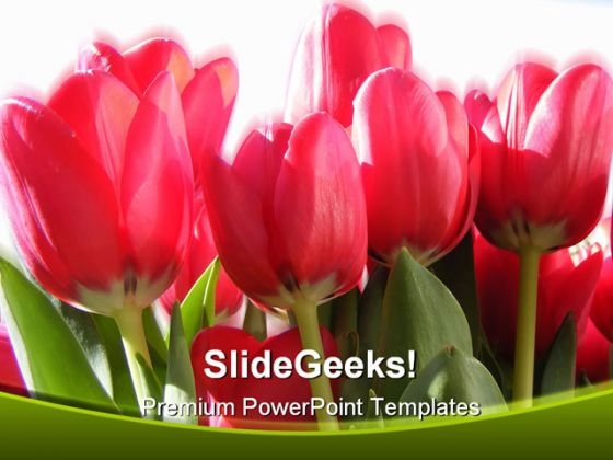 Vivid Tulips Nature PowerPoint Backgrounds And Templates 1210