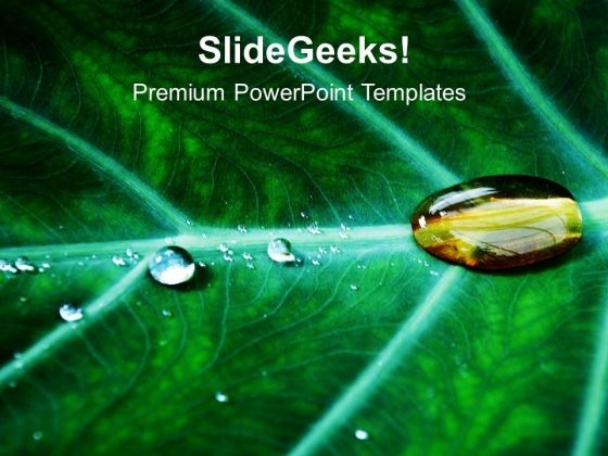 Water Drop On Leaf PowerPoint Templates Ppt Backgrounds For Slides 0613
