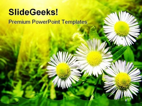 White Chamomiles Flowers Beauty PowerPoint Templates And PowerPoint Backgrounds 0411