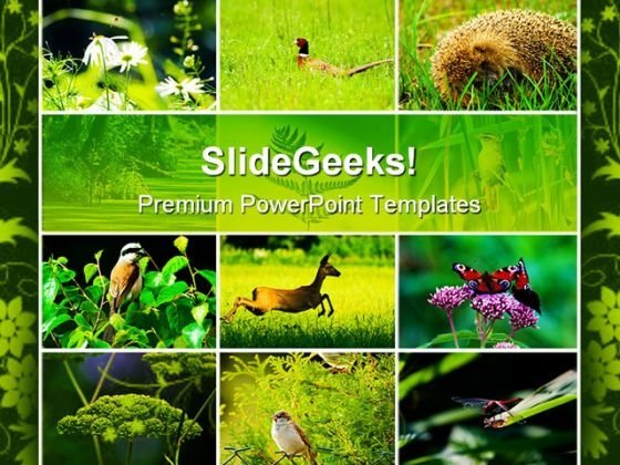 Wild Nature Animals PowerPoint Templates And PowerPoint Backgrounds 0511