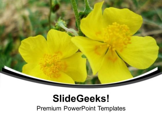 Yellow Flowers With Background PowerPoint Templates Ppt Backgrounds For Slides 0613