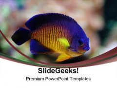 Angel Fish Animals PowerPoint Templates And PowerPoint Backgrounds 0111