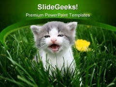 Baby Cat Animals PowerPoint Templates And PowerPoint Backgrounds 0211