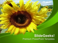 Background Template With Sunflower PowerPoint Templates Ppt Backgrounds For Slides 0513