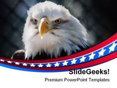 Bald Eagle Americana PowerPoint Templates And PowerPoint Backgrounds 0311