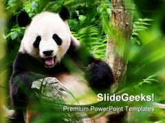 Bear Animals PowerPoint Templates And PowerPoint Backgrounds 0111