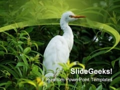 Bird In Tree Animals PowerPoint Themes And PowerPoint Slides 0211