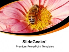 Blooming Flowers With Honey Bee Sucks Nectar PowerPoint Templates Ppt Backgrounds For Slides 0613