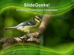 Blue Tit Fledgling Nature PowerPoint Themes And PowerPoint Slides 0211