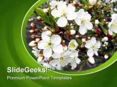 Branch Of A Blossoming Tree Nature PowerPoint Templates And PowerPoint Backgrounds 0311