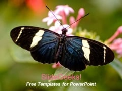 Butterfly1 0409