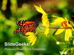 Butterfly And Bee Animals PowerPoint Templates And PowerPoint Backgrounds 0111