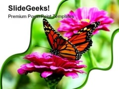 Butterfly And Flower Animals PowerPoint Templates And PowerPoint Backgrounds 0211