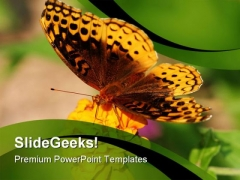 Butterfly And Sunflower Animals PowerPoint Themes And PowerPoint Slides 0211