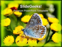 Butterfly Beauty PowerPoint Templates And PowerPoint Backgrounds 0211