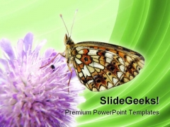 Butterfly Insect Nature PowerPoint Templates And PowerPoint Backgrounds 0211