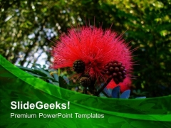 Calliandra Grandiflora Flower Plant PowerPoint Templates Ppt Backgrounds For Slides 0513