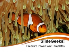 Clown Fish Animals PowerPoint Templates And PowerPoint Backgrounds 0211