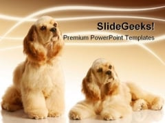 Cocker Spaniels Animals PowerPoint Templates And PowerPoint Backgrounds 0211