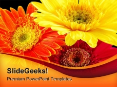 Colorful Gerber Daisies Beauty PowerPoint Templates And PowerPoint Backgrounds 0211