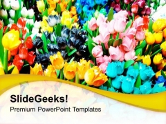 Colorful Tulips For Gifting Purpose PowerPoint Templates Ppt Backgrounds For Slides 0213