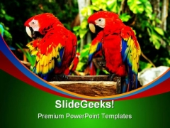 Couple Of Parrots Nature PowerPoint Templates And PowerPoint Backgrounds 0211