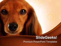 Dachshund Head Portrait Animals PowerPoint Themes And PowerPoint Slides 0211