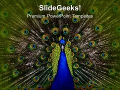 Dancing Peacock Beauty PowerPoint Templates Ppt Backgrounds For Slides 0213