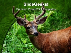 Deer Animal PowerPoint Template 0810