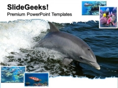 Dolphin Animals PowerPoint Templates And PowerPoint Themes 0512