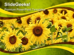 Field Of Sunflowers Beauty PowerPoint Templates And PowerPoint Backgrounds 0311