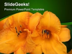 Flower Beauty PowerPoint Templates And PowerPoint Backgrounds 0311
