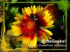 Flower With Honey Bee Nature PowerPoint Templates Ppt Backgrounds For Slides 0213