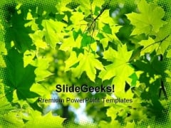 Fresh Green Maple Leaves Nature PowerPoint Themes And PowerPoint Slides 0411