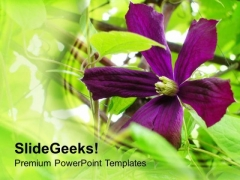 Garden With Purple Flowers Background PowerPoint Templates Ppt Backgrounds For Slides 0613