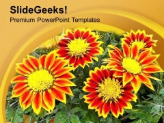 Gazanias Summer Flowering Plant PowerPoint Templates Ppt Backgrounds For Slides 0513