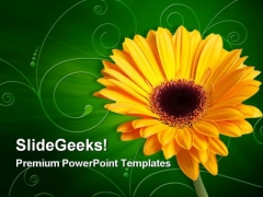 Gerber Yellow Flower Beauty PowerPoint Themes And PowerPoint Slides 0311