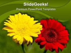 Gerbera Flower Nature PowerPoint Template 1110