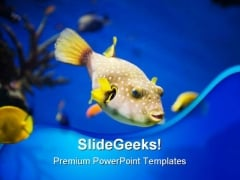 Golden Fish Animals PowerPoint Templates And PowerPoint Backgrounds 0211