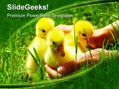 Gosling Animals PowerPoint Templates And PowerPoint Backgrounds 0211