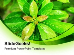 Green Leaves Nature PowerPoint Backgrounds And Templates 0111