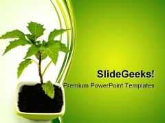 Growing Green Plant Nature PowerPoint Templates And PowerPoint Backgrounds 0511