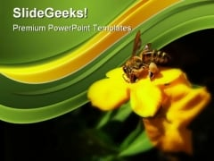 Honey Bee Collecting Pollen Nature PowerPoint Themes And PowerPoint Slides 0211