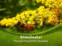 Honey Bee With Yellow Flowers PowerPoint Templates Ppt Backgrounds For Slides 0613
